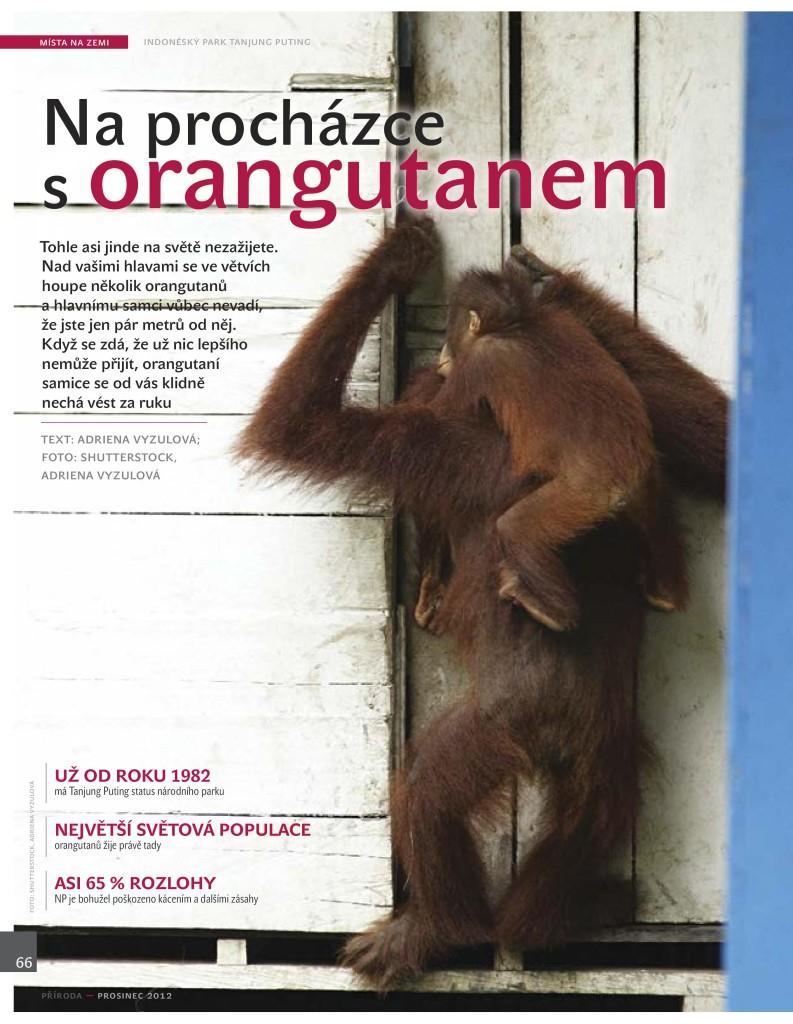 Orangutani Priroda 12_12-page-001