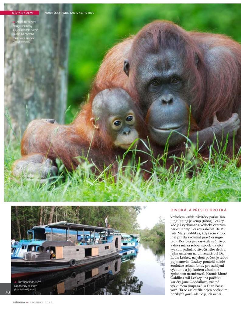 Orangutani Priroda 12_12-page-005