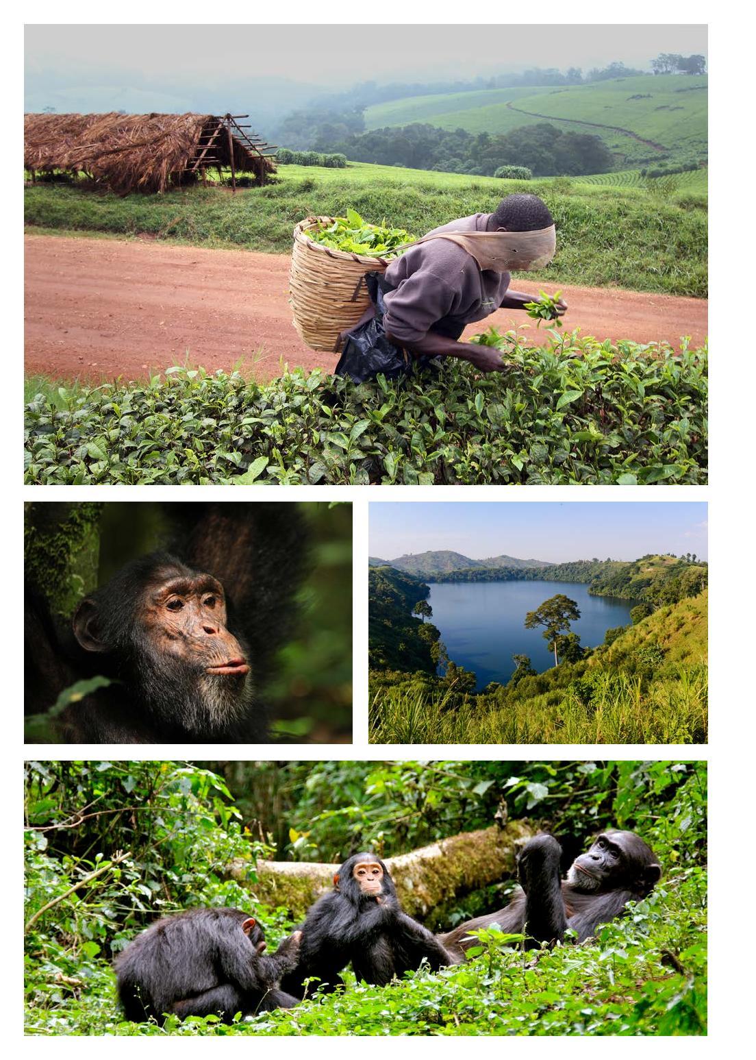 KO1604_Uganda_Simpanzi_JS-page-005